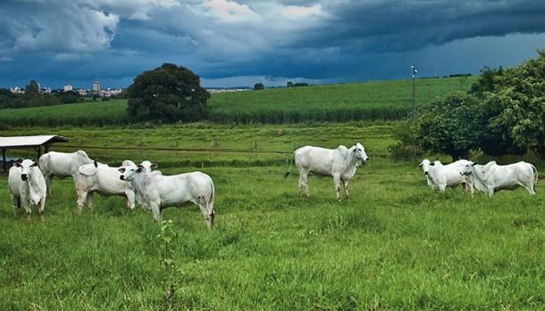 """""""A produção de bovinos principalmente à pasto, deve ser melhorada de forma mais abrangente"""""""